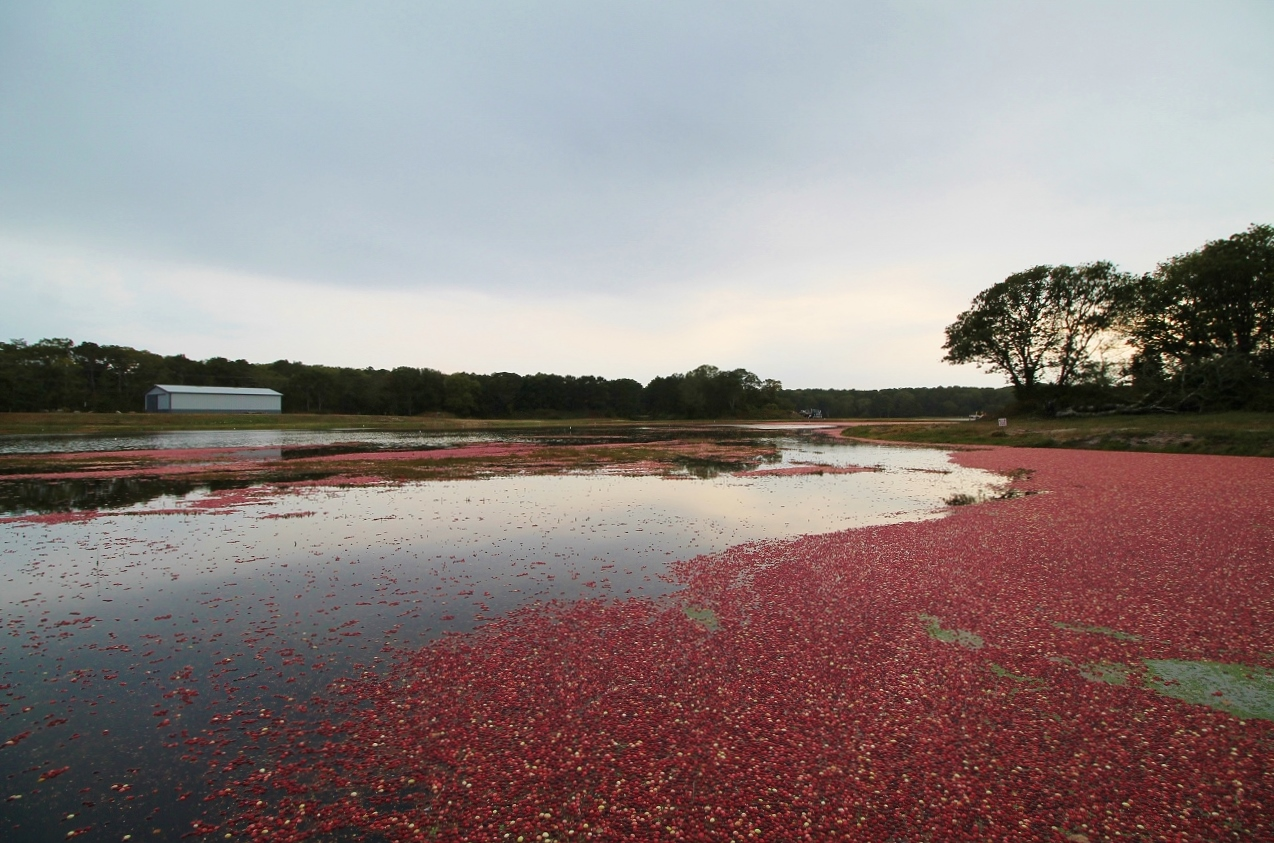 cranberry bog tour cape cod
